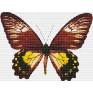 Малайская бабочка 30*40 см