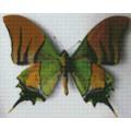 Индийская бабочка 30*40 см