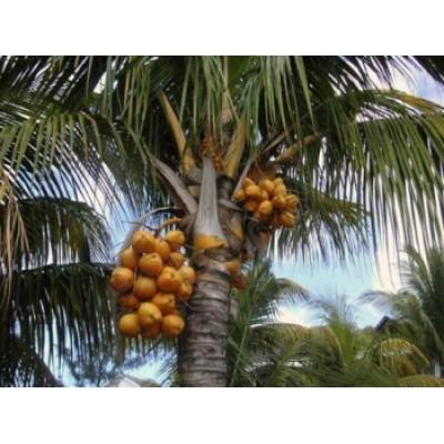 Пальмовое, масло баттер рафинированное, 1 кг.