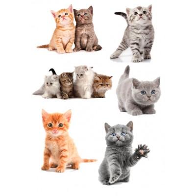 Милые котята, 15*20 см